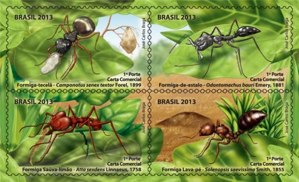 Formigas-selos