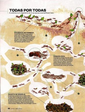 FormigasSuper-page-003