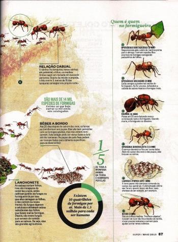 FormigasSuper-page-004