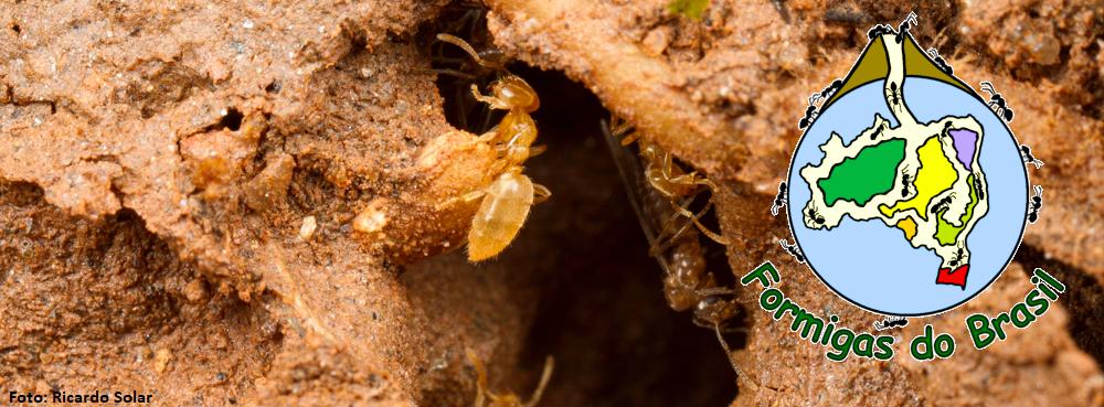 Formigas do Brasil